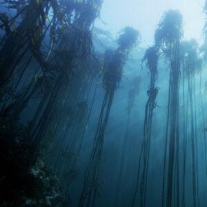 Atlantic Edge Films Stock Nature Film Footage
