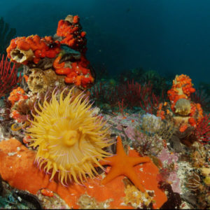 Atlantic Edge Films Stock Nature Film Footage